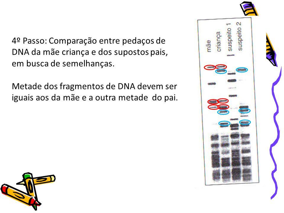 4º Passo: Comparação entre pedaços de DNA da mãe criança e dos supostos pais, em busca de semelhanças.