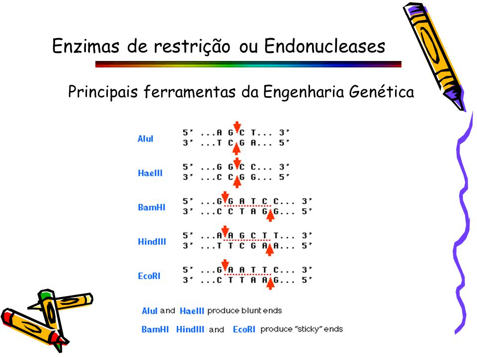Enzimas de restrição ou Endonucleases