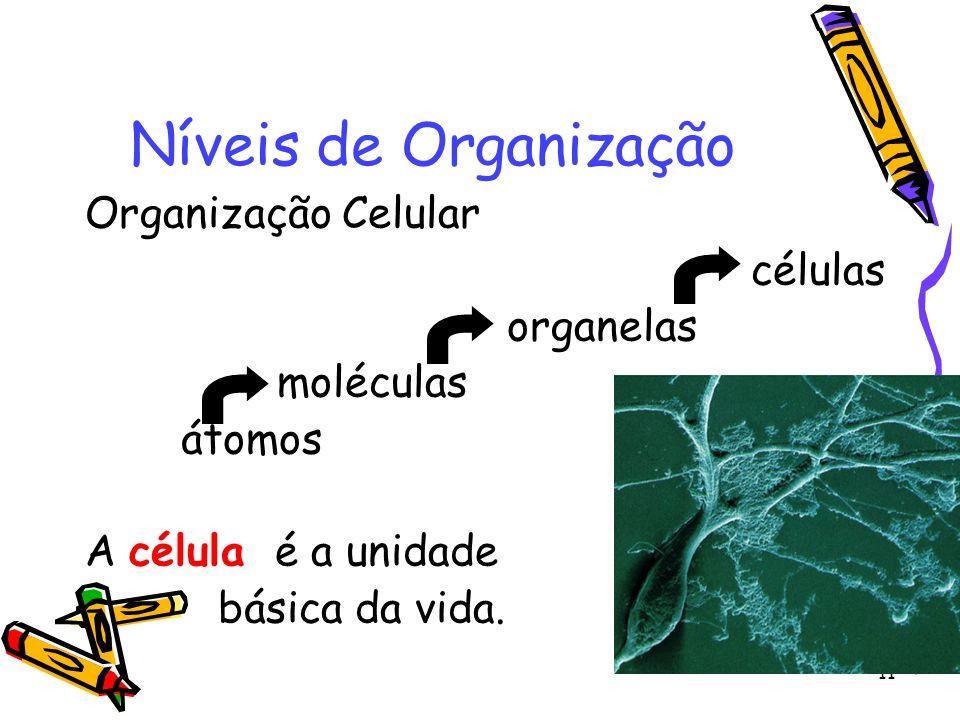 Níveis de Organização Organização Celular células organelas moléculas