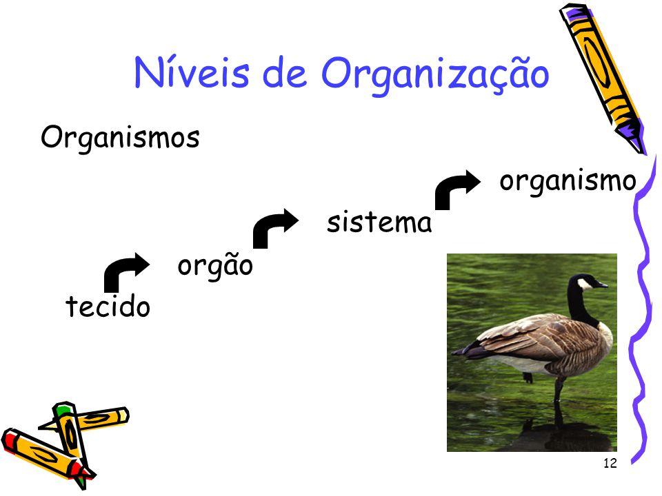 Níveis de Organização Organismos organismo sistema orgão tecido