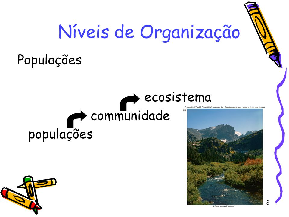 Níveis de Organização Populações ecosistema communidade populações