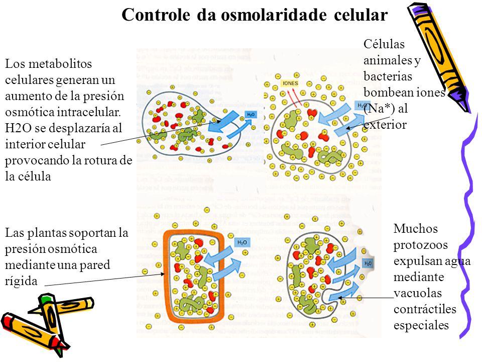 Controle da osmolaridade celular