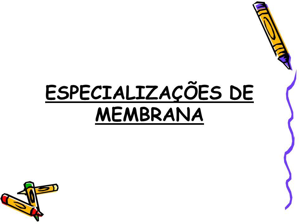 ESPECIALIZAÇÕES DE MEMBRANA