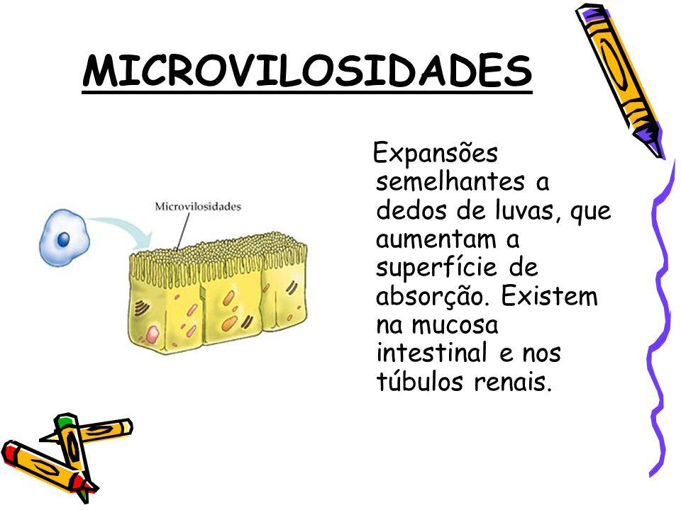 MICROVILOSIDADES Expansões semelhantes a dedos de luvas, que aumentam a superfície de absorção.