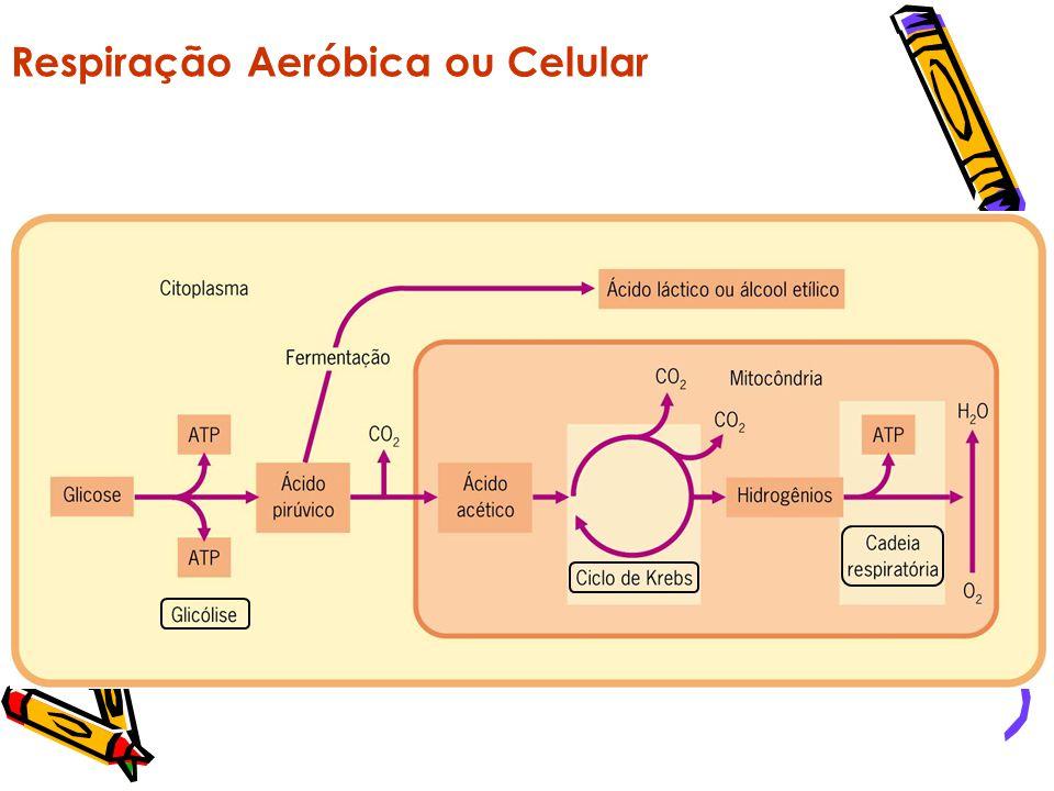 Respiração Aeróbica ou Celular