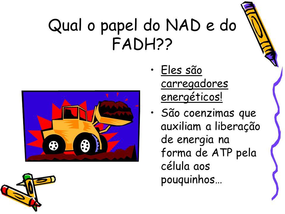 Qual o papel do NAD e do FADH