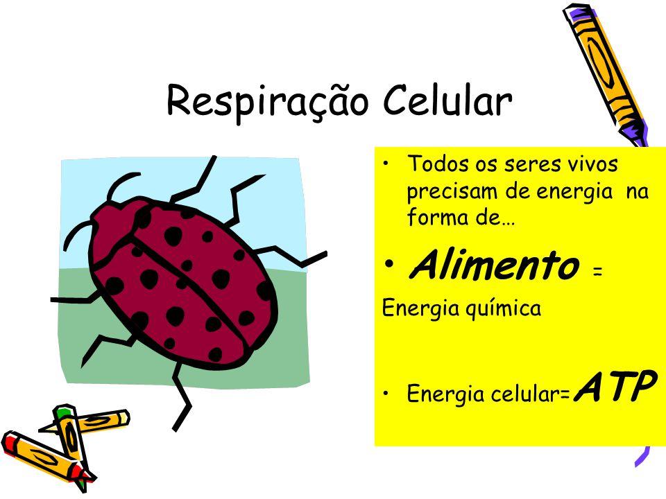 Respiração Celular Alimento =