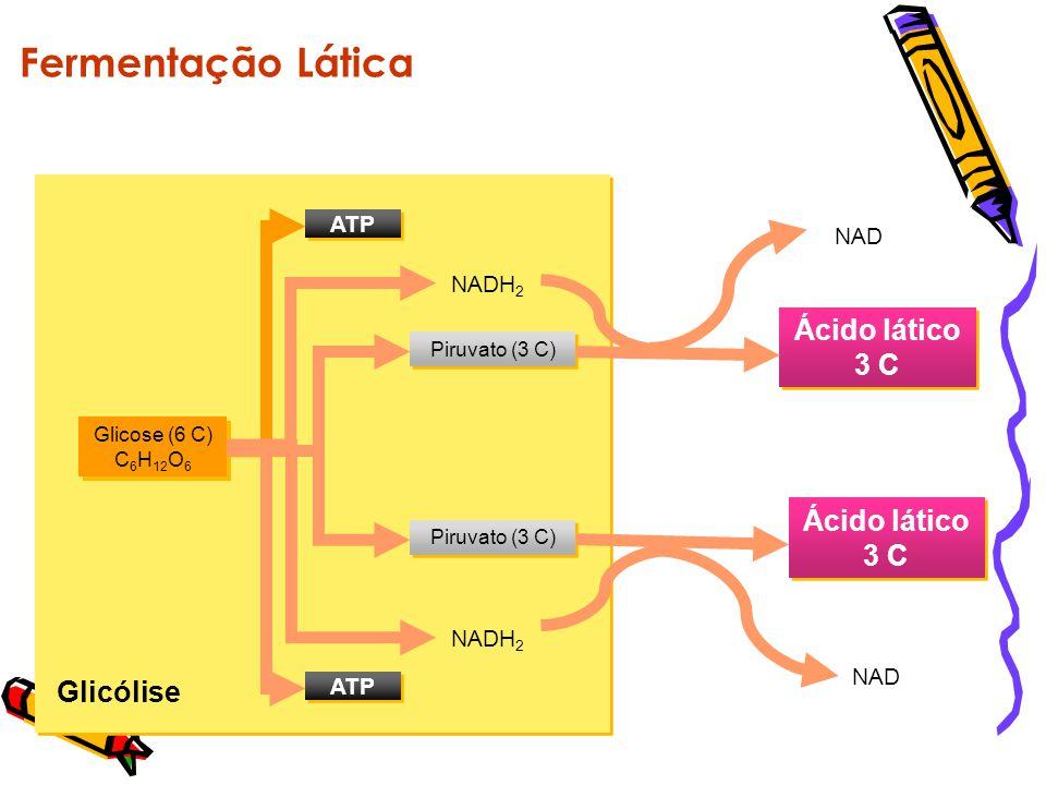 Fermentação Lática Ácido lático 3 C Glicólise NADH2 NAD ATP