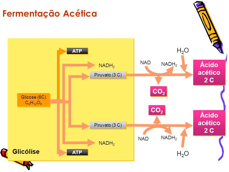 Fermentação Acética CO2 Ácido acético 2 C Glicólise H2O NADH2 NAD