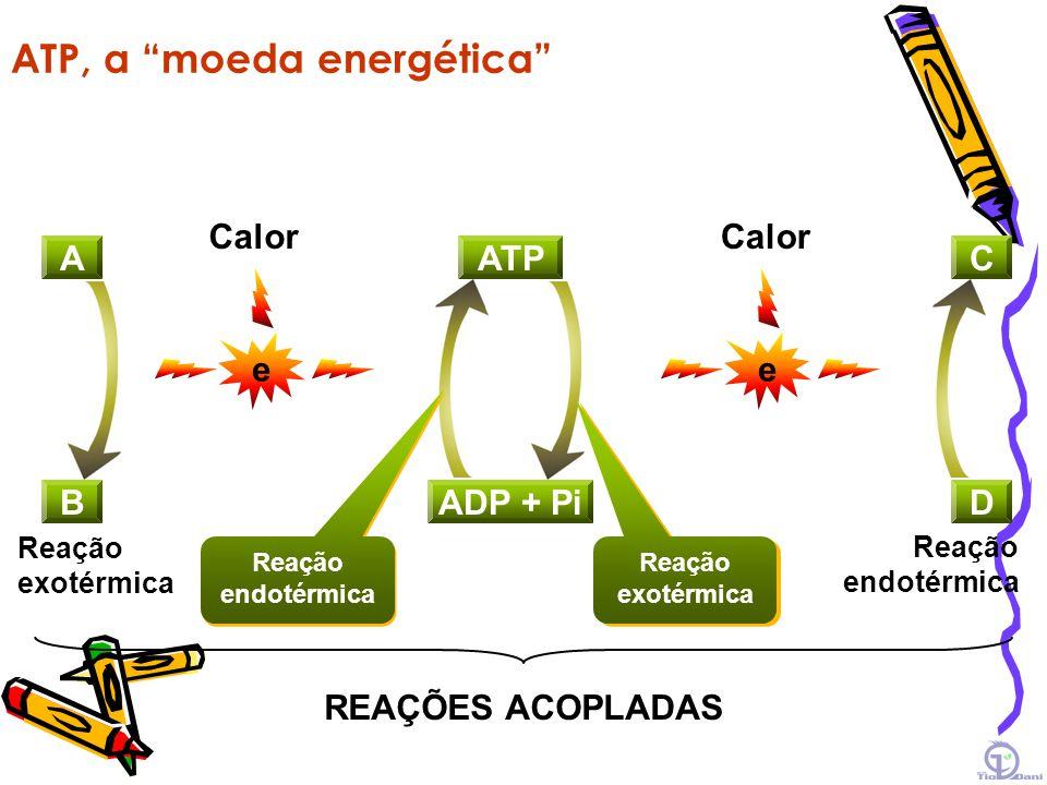 ATP, a moeda energética