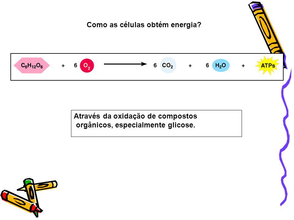 Como as células obtém energia