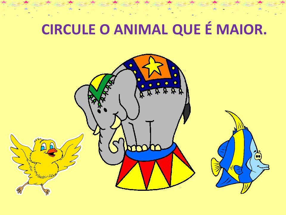 CIRCULE O ANIMAL QUE É MAIOR.