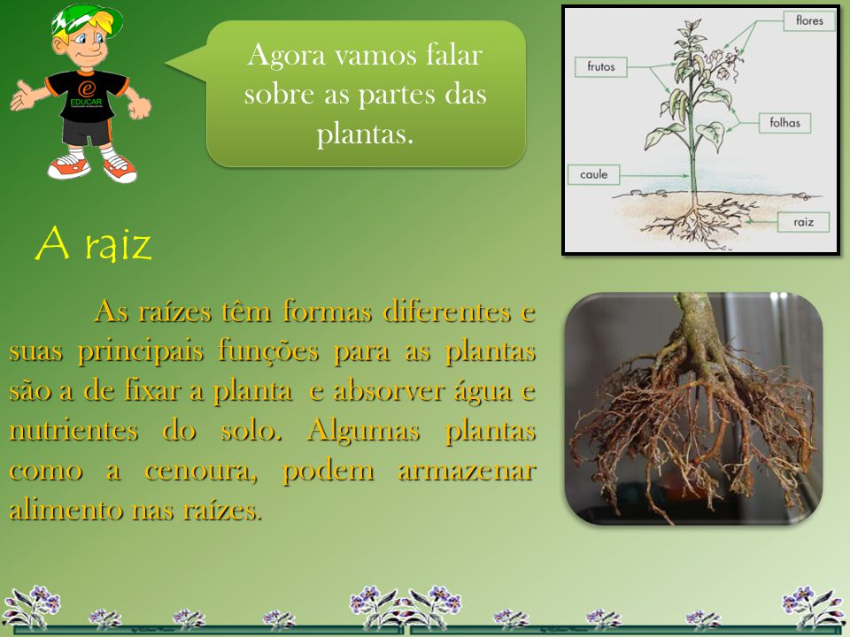 Agora vamos falar sobre as partes das plantas.