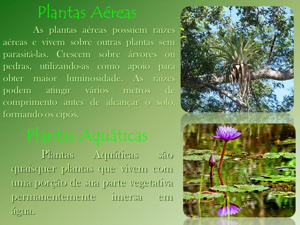 Plantas Aéreas Plantas Aquáticas