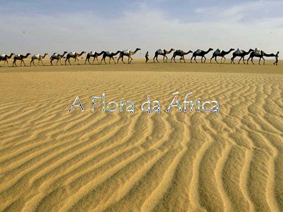 A Flora da África