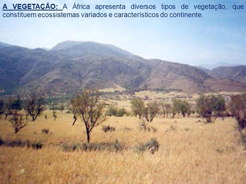 A VEGETAÇÃO: A África apresenta diversos tipos de vegetação, que constituem ecossistemas variados e característicos do continente.