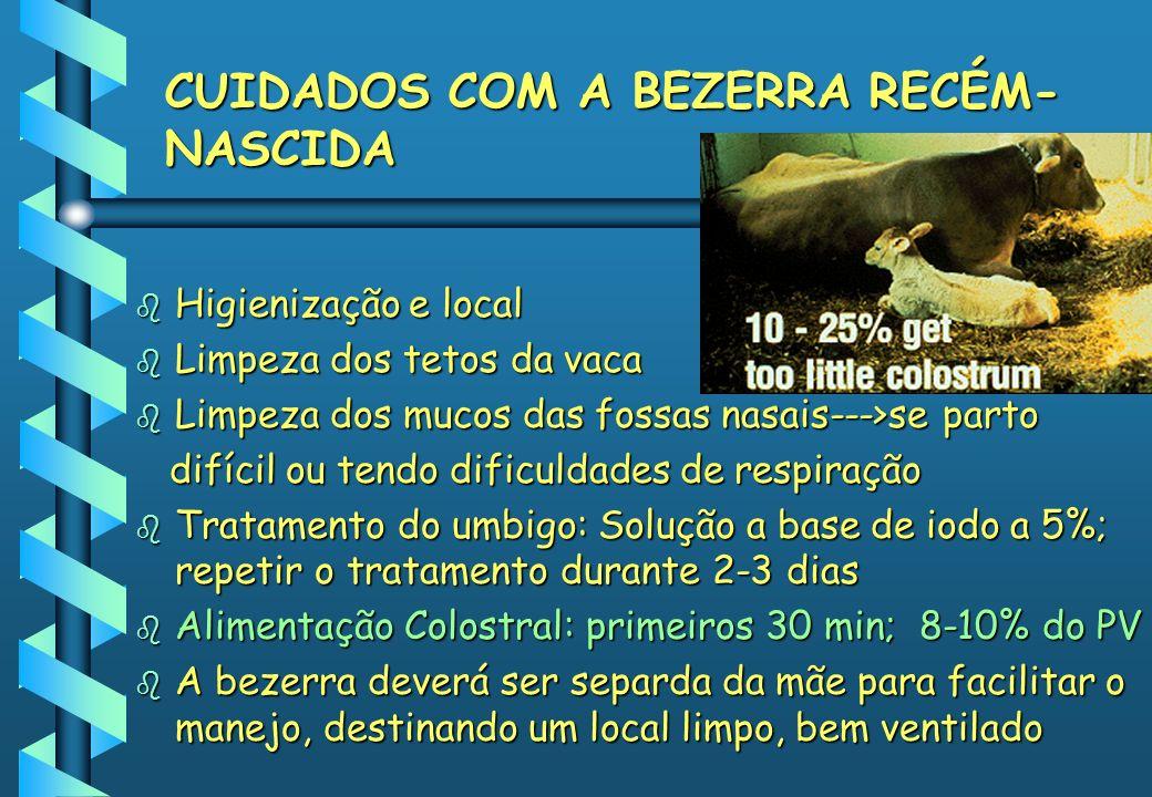CUIDADOS COM A BEZERRA RECÉM-NASCIDA