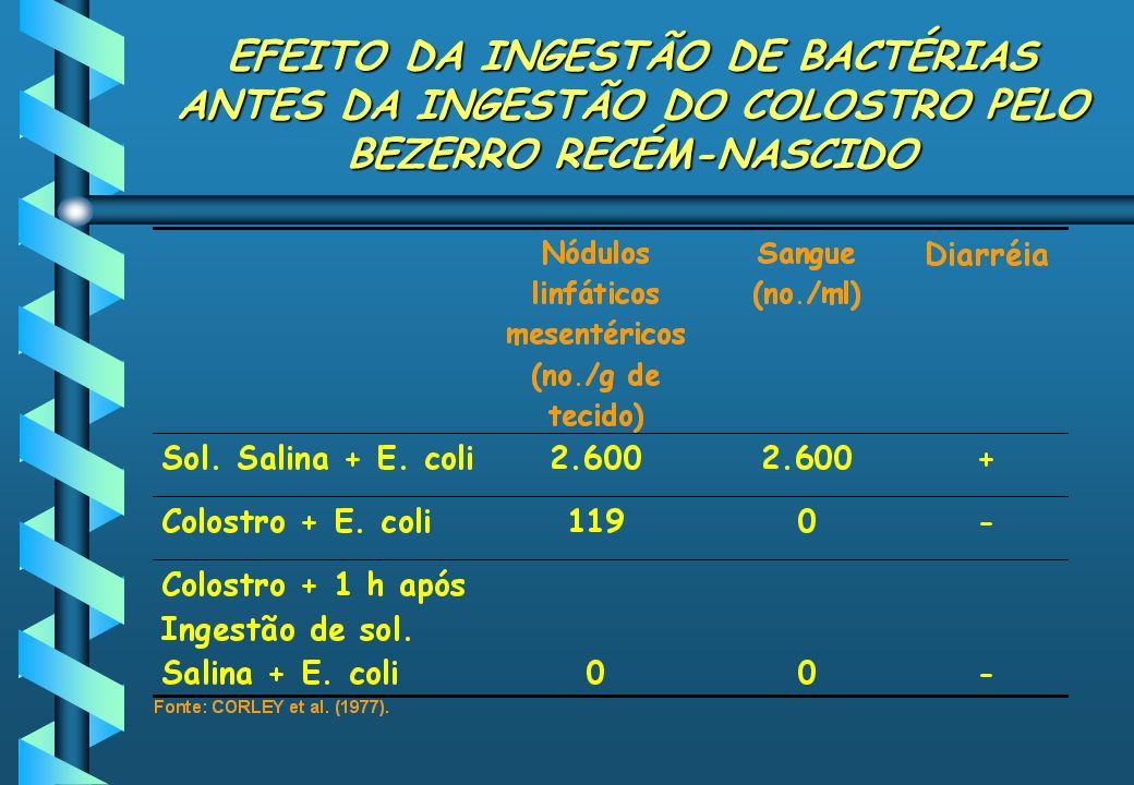 EFEITO DA INGESTÃO DE BACTÉRIAS ANTES DA INGESTÃO DO COLOSTRO PELO BEZERRO RECÉM-NASCIDO