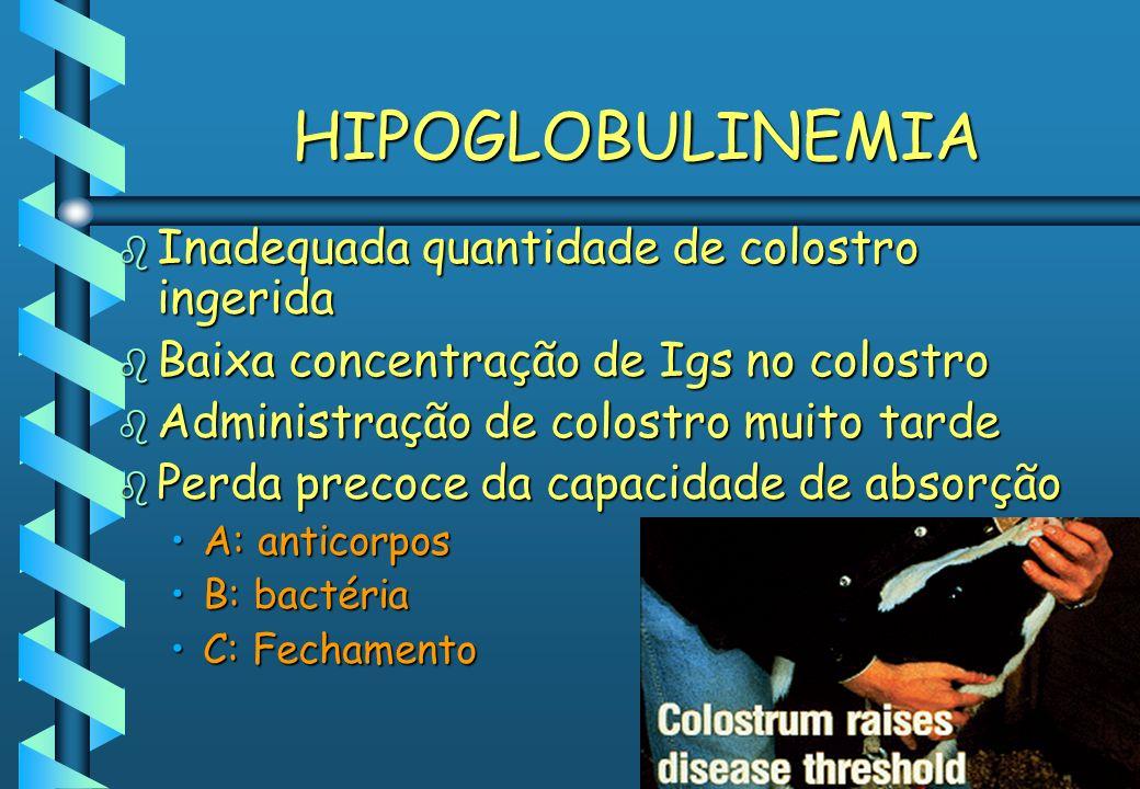 HIPOGLOBULINEMIA Inadequada quantidade de colostro ingerida