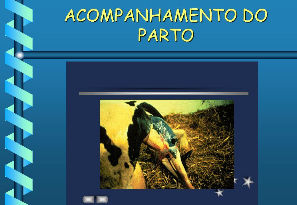 ACOMPANHAMENTO DO PARTO