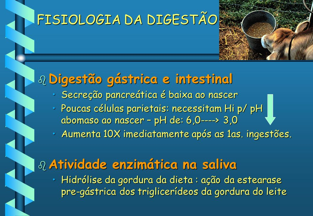 FISIOLOGIA DA DIGESTÃO