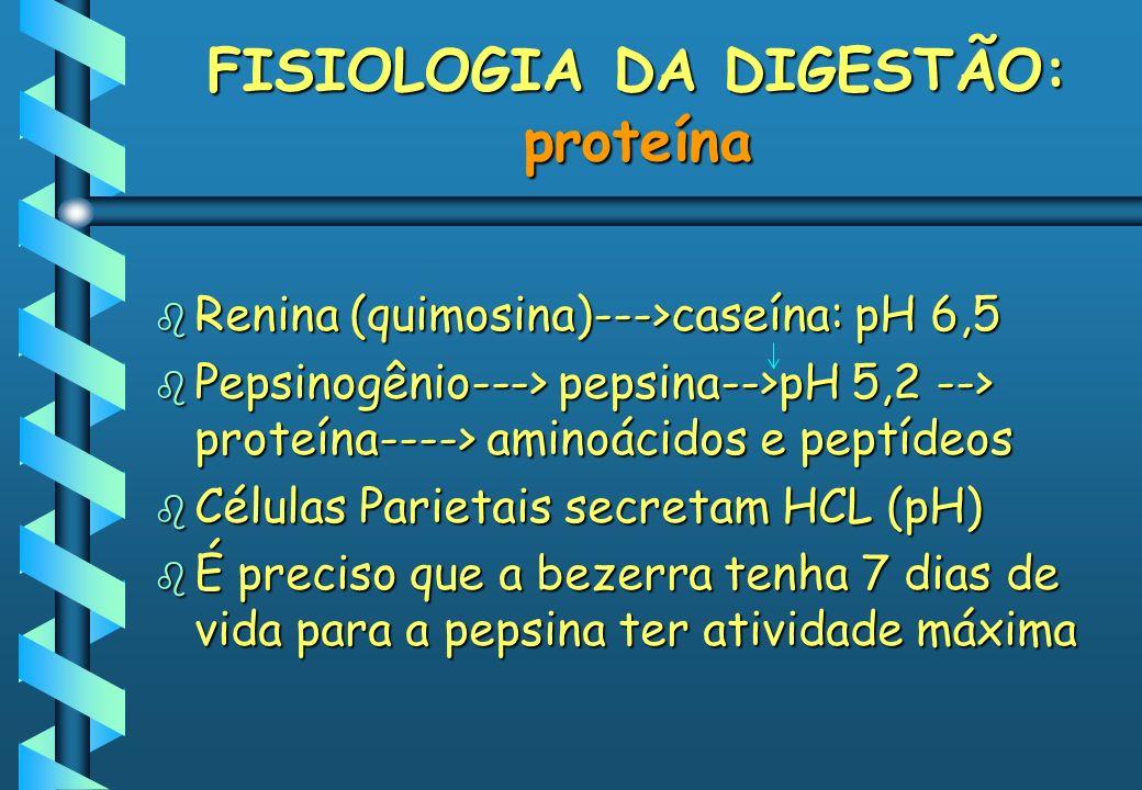 FISIOLOGIA DA DIGESTÃO: proteína