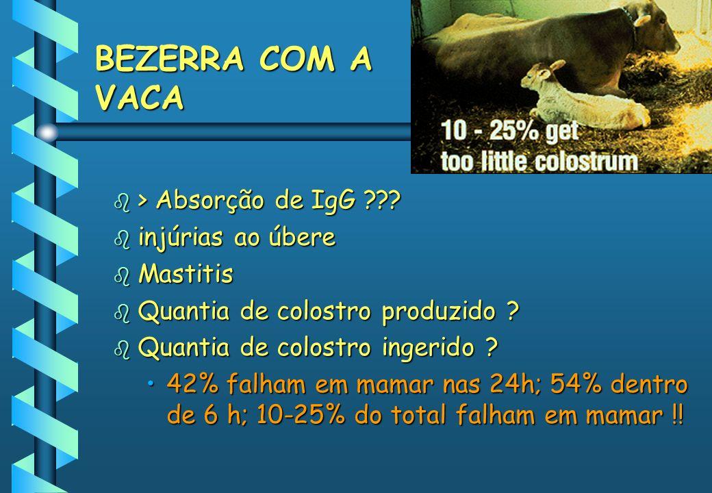 BEZERRA COM A VACA > Absorção de IgG injúrias ao úbere Mastitis