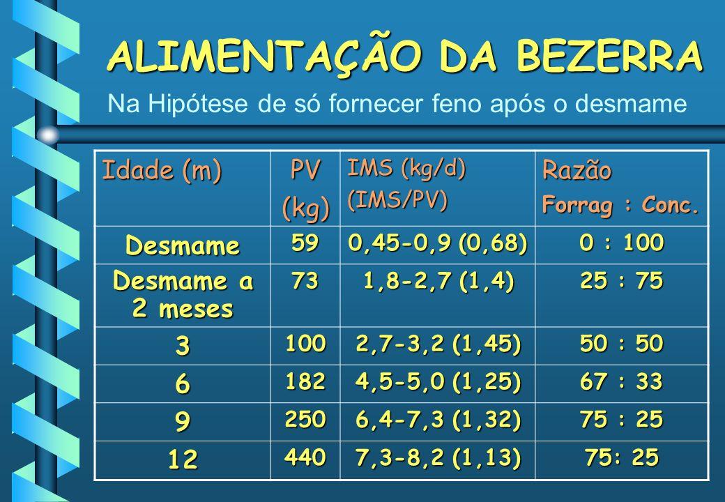 ALIMENTAÇÃO DA BEZERRA