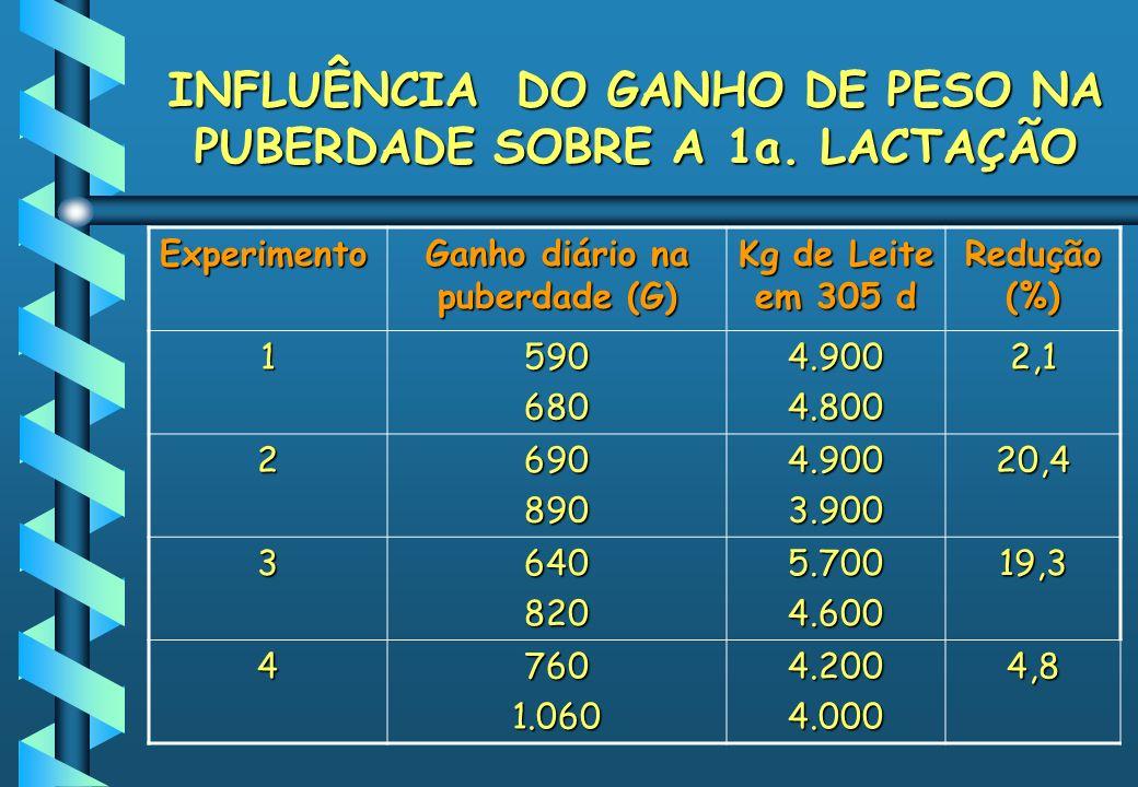 INFLUÊNCIA DO GANHO DE PESO NA PUBERDADE SOBRE A 1a. LACTAÇÃO