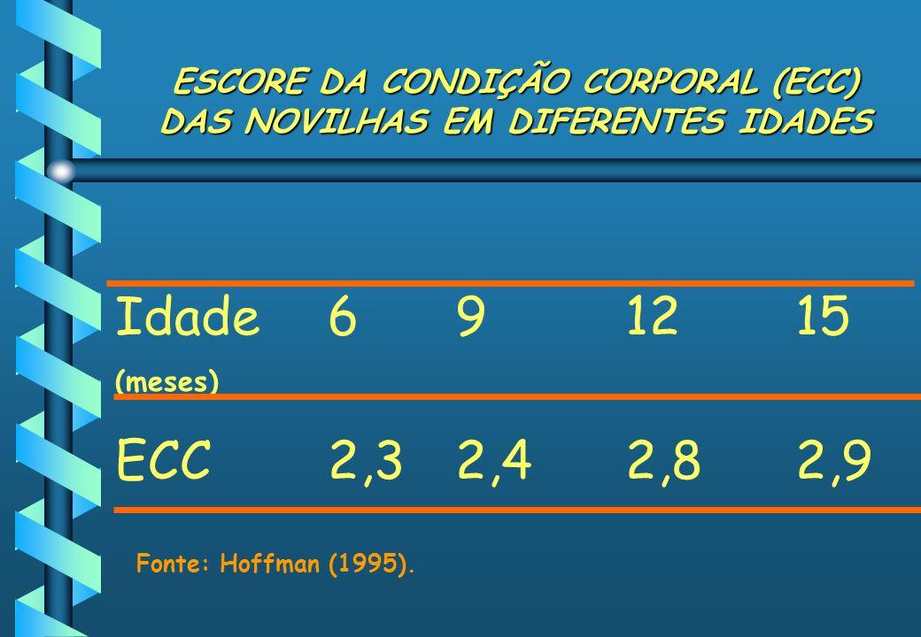 ESCORE DA CONDIÇÃO CORPORAL (ECC) DAS NOVILHAS EM DIFERENTES IDADES