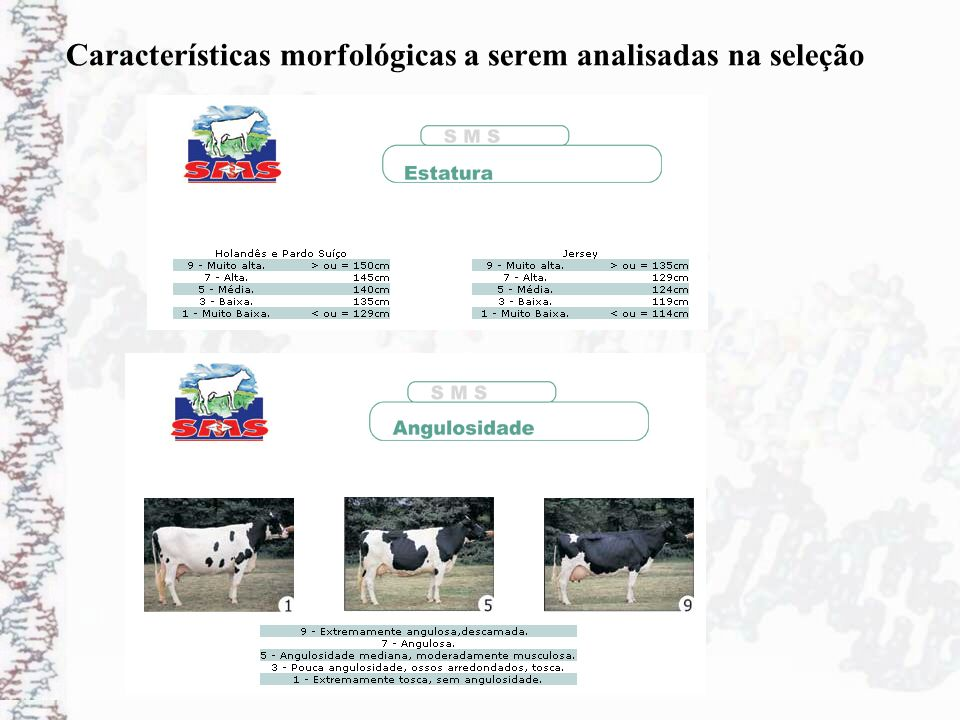 Características morfológicas a serem analisadas na seleção