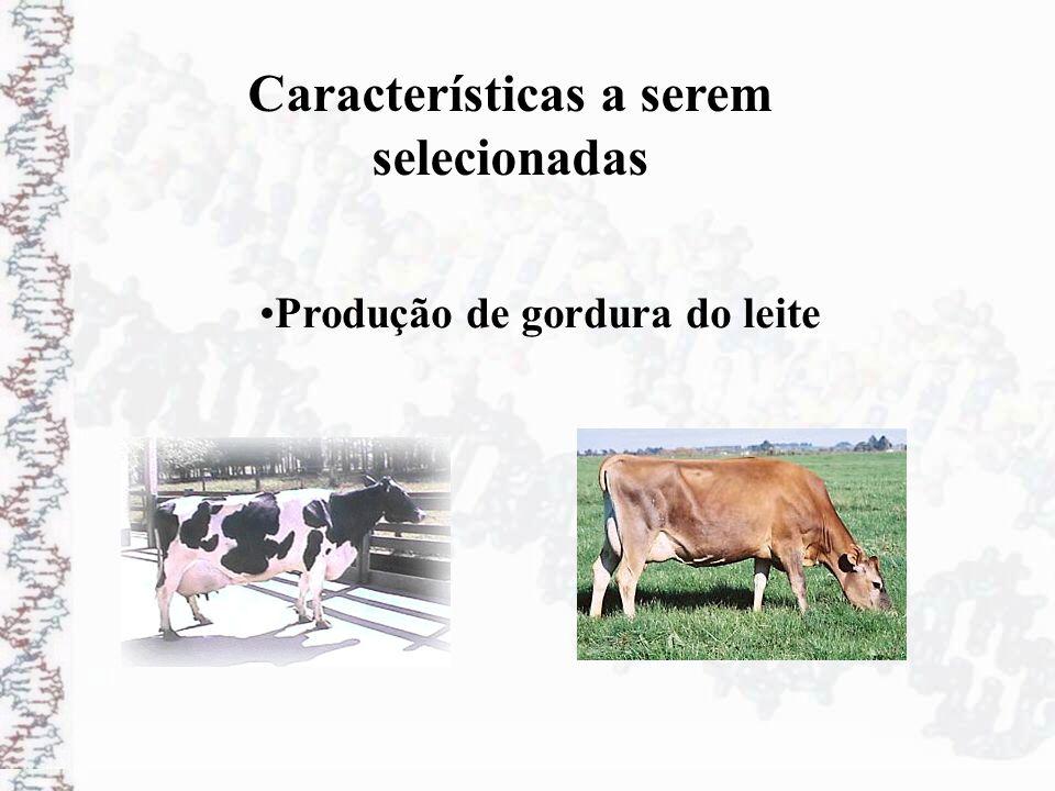 Características a serem selecionadas Produção de gordura do leite