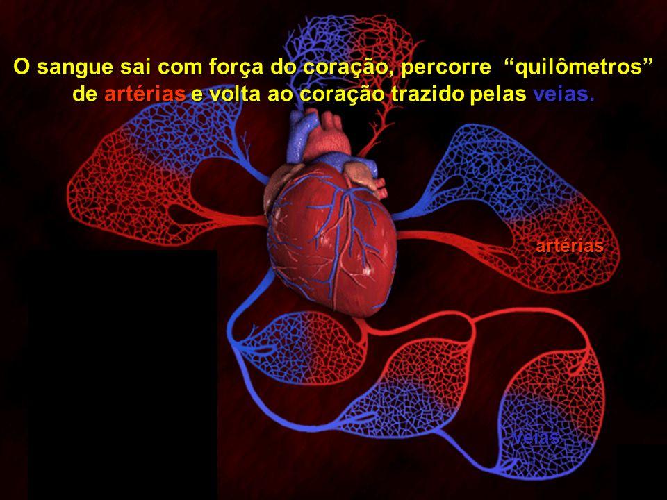 O sangue sai com força do coração, percorre quilômetros de artérias e volta ao coração trazido pelas veias.