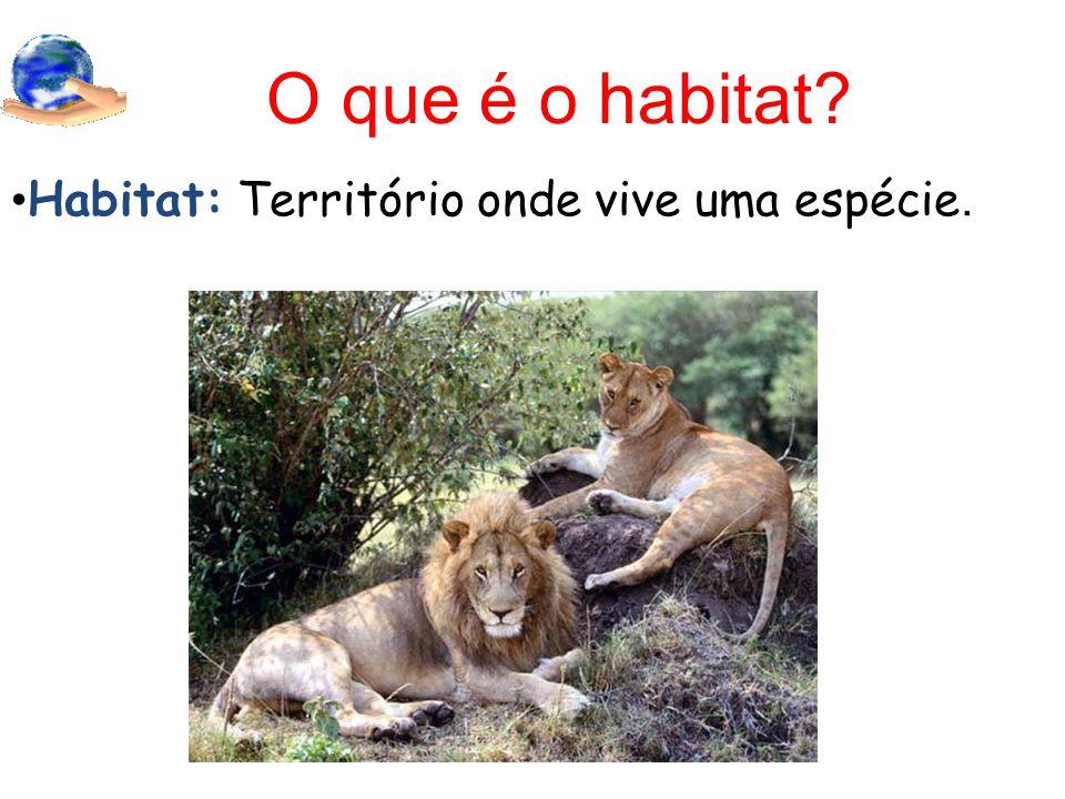 O que é o habitat Habitat: Território onde vive uma espécie.