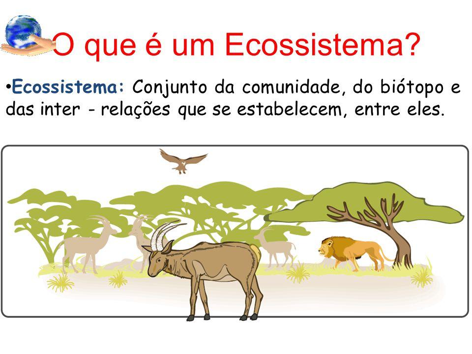 O que é um Ecossistema.