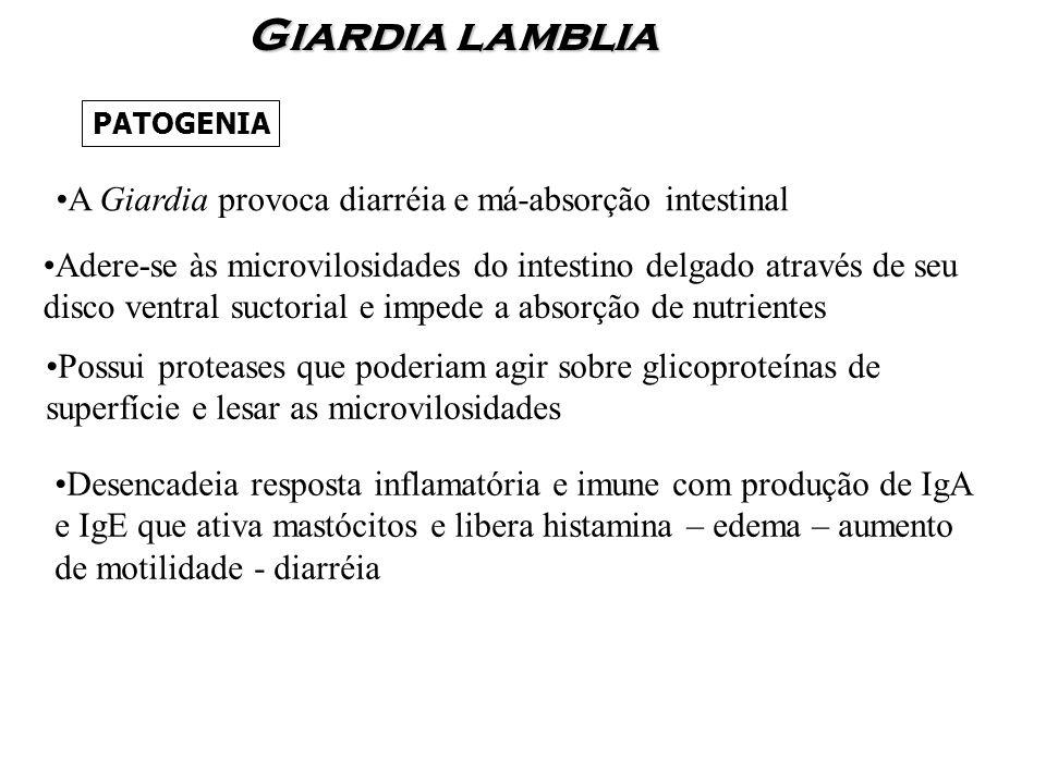 Giardia lamblia A Giardia provoca diarréia e má-absorção intestinal