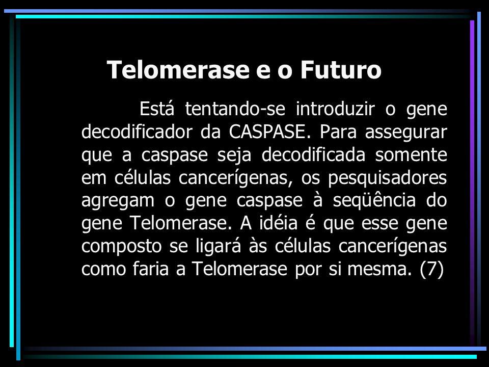 Telomerase e o Futuro