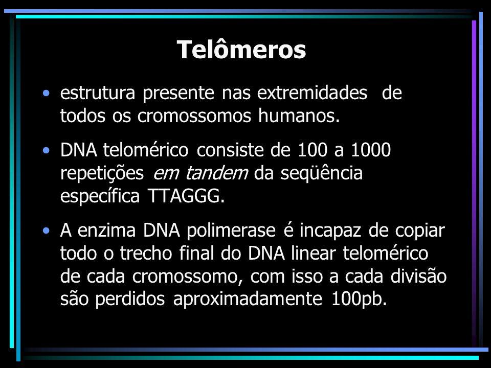 Telômerosestrutura presente nas extremidades de todos os cromossomos humanos.