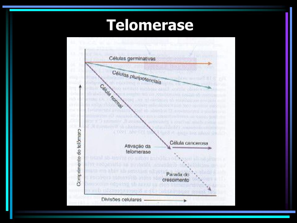 Funções da Telomerase