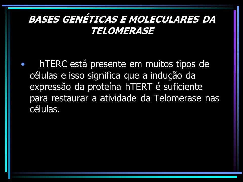 BASES GENÉTICAS E MOLECULARES DA TELOMERASE TELOMERASE