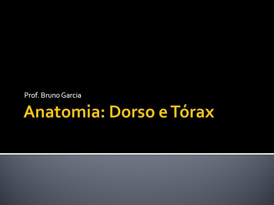 Anatomia: Dorso e Tórax