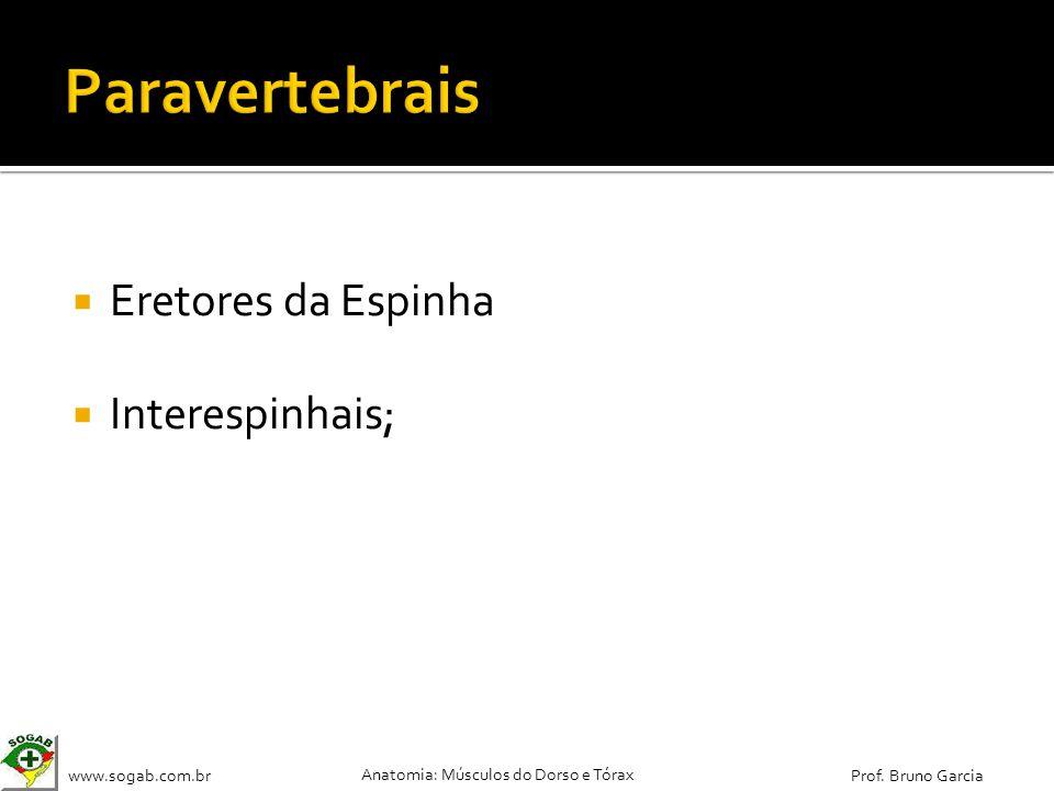 Paravertebrais Eretores da Espinha Interespinhais;