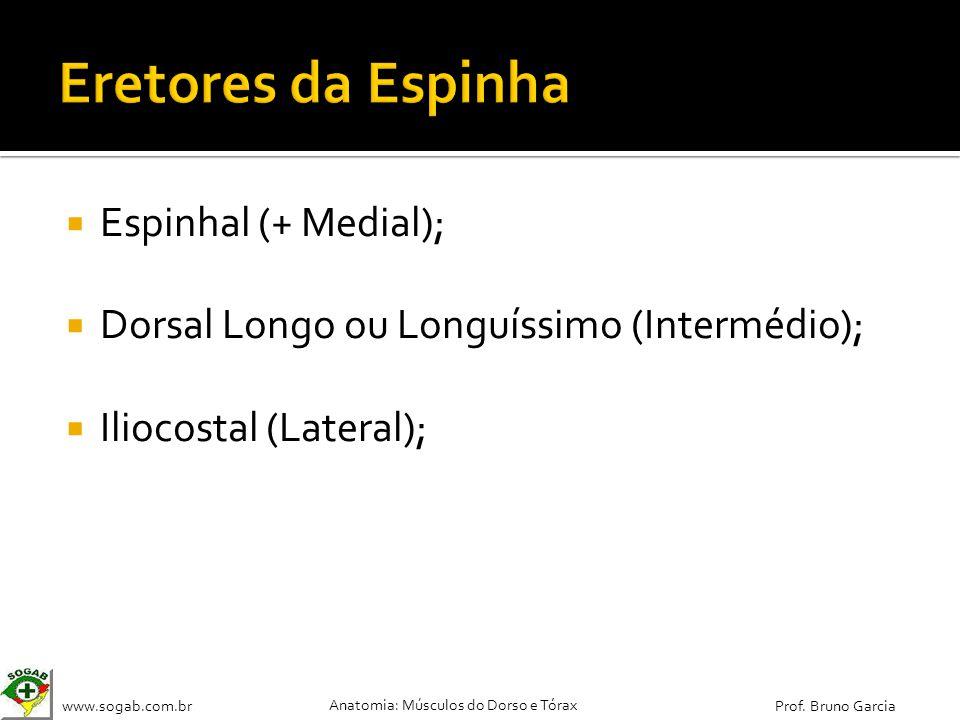 Eretores da Espinha Espinhal (+ Medial);