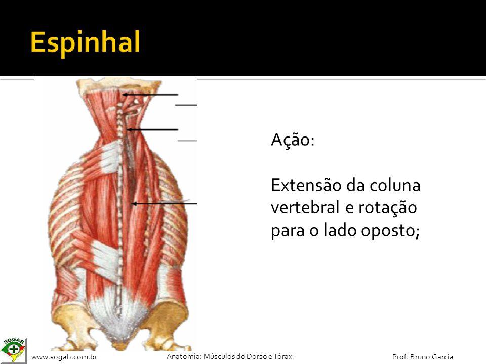 Espinhal Ação: Extensão da coluna vertebral e rotação para o lado oposto;