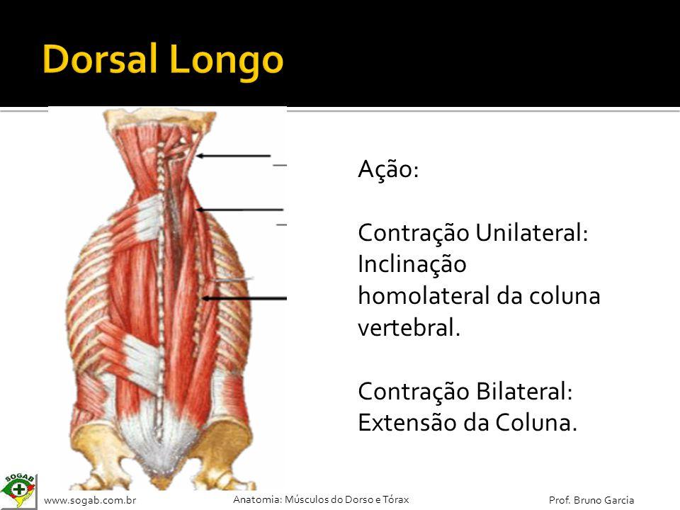 Dorsal Longo Ação: Contração Unilateral: Inclinação homolateral da coluna vertebral.