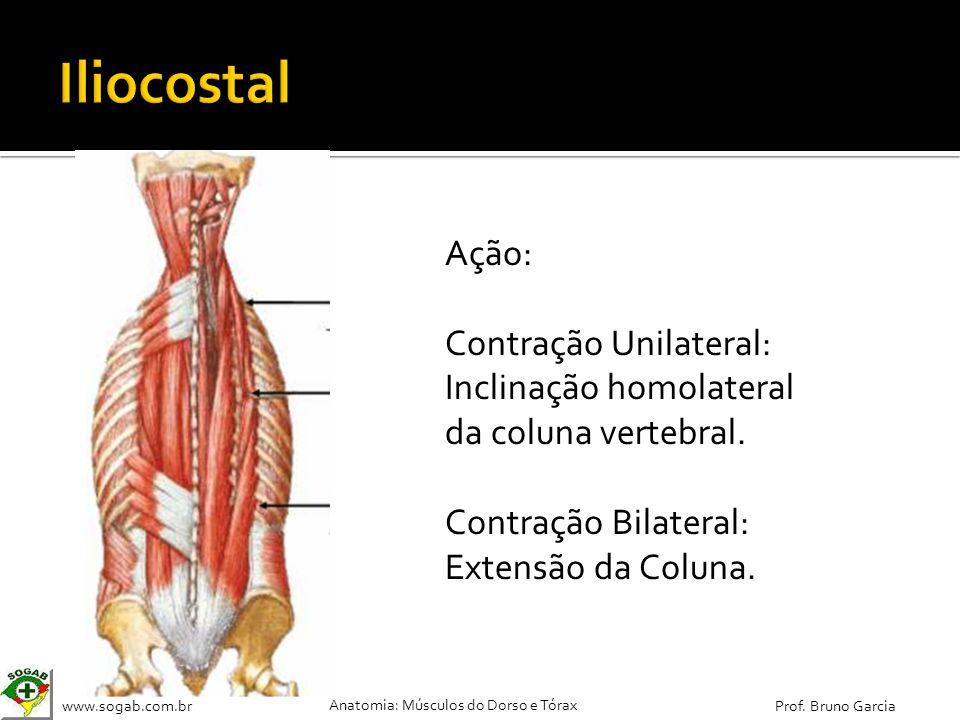 Iliocostal Ação: Contração Unilateral: Inclinação homolateral da coluna vertebral.
