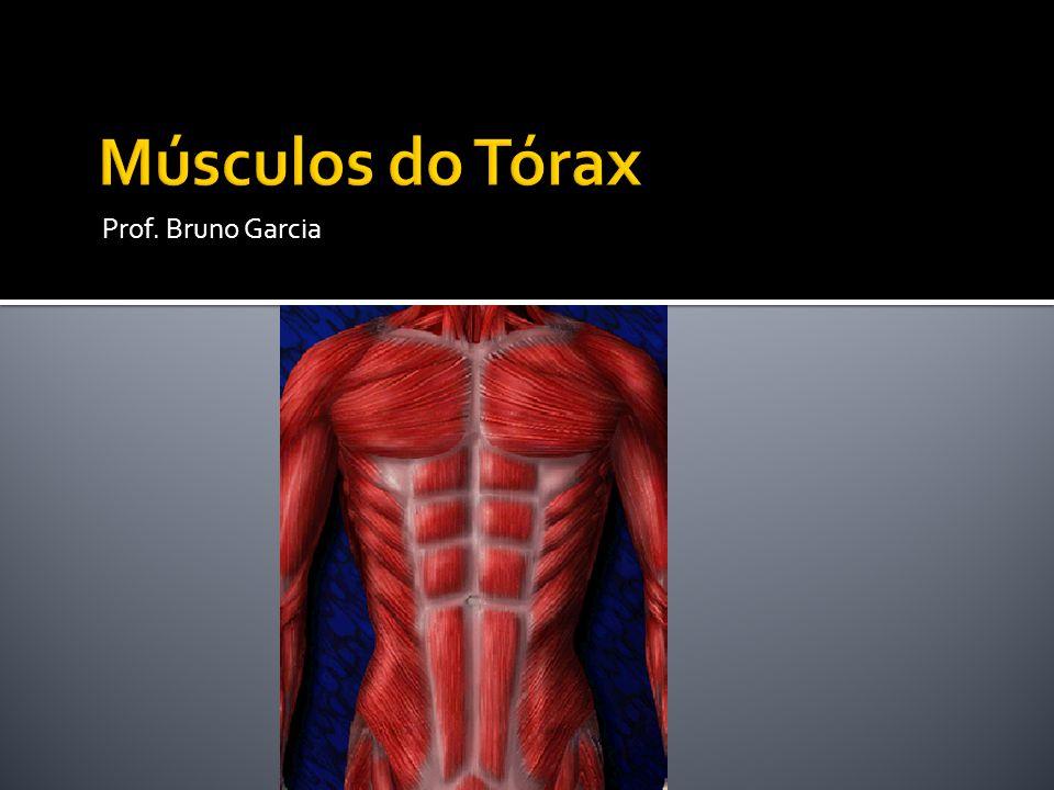 Músculos do Tórax Prof. Bruno Garcia