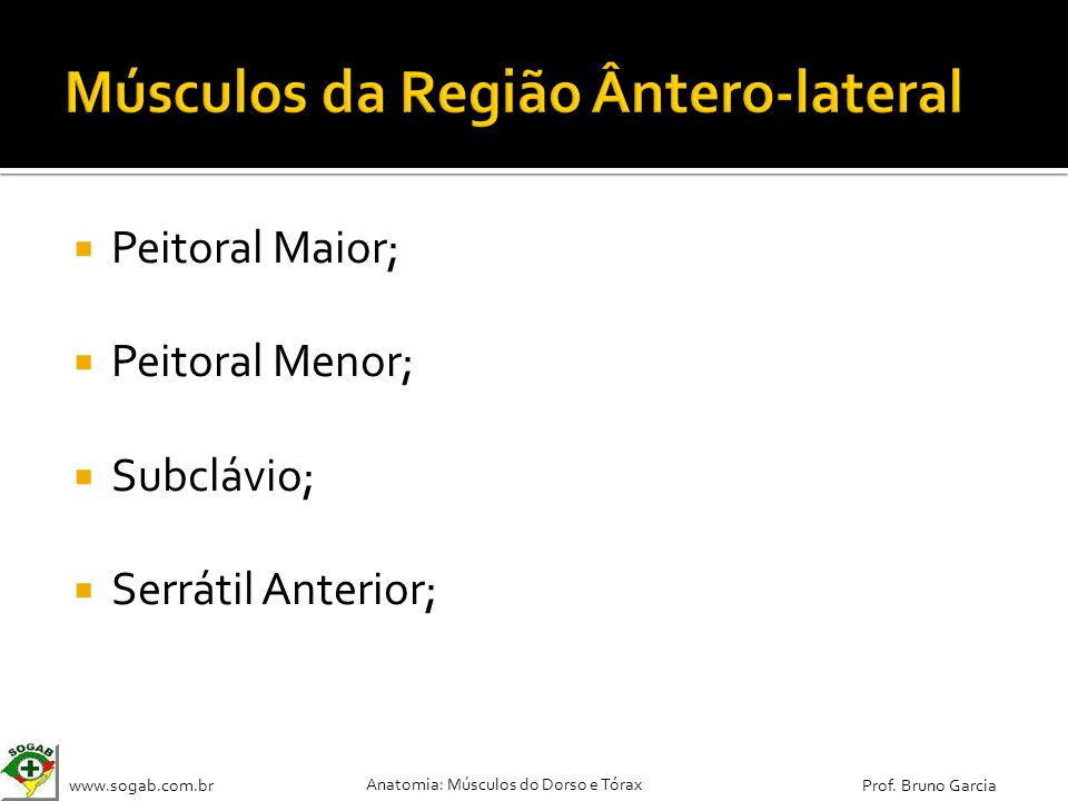 Músculos da Região Ântero-lateral
