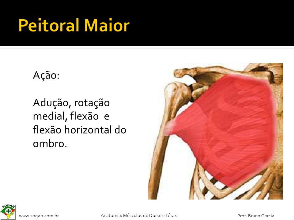 Peitoral Maior Ação: Adução, rotação medial, flexão e flexão horizontal do ombro.