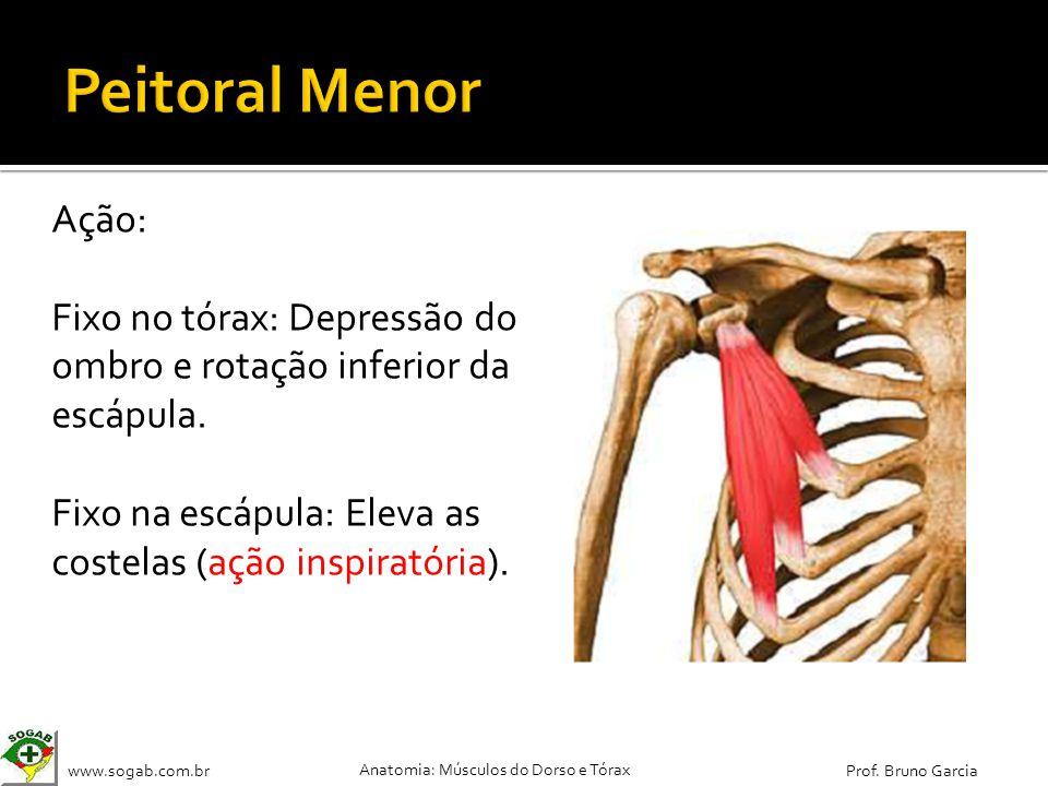 Peitoral Menor Ação: Fixo no tórax: Depressão do ombro e rotação inferior da escápula.